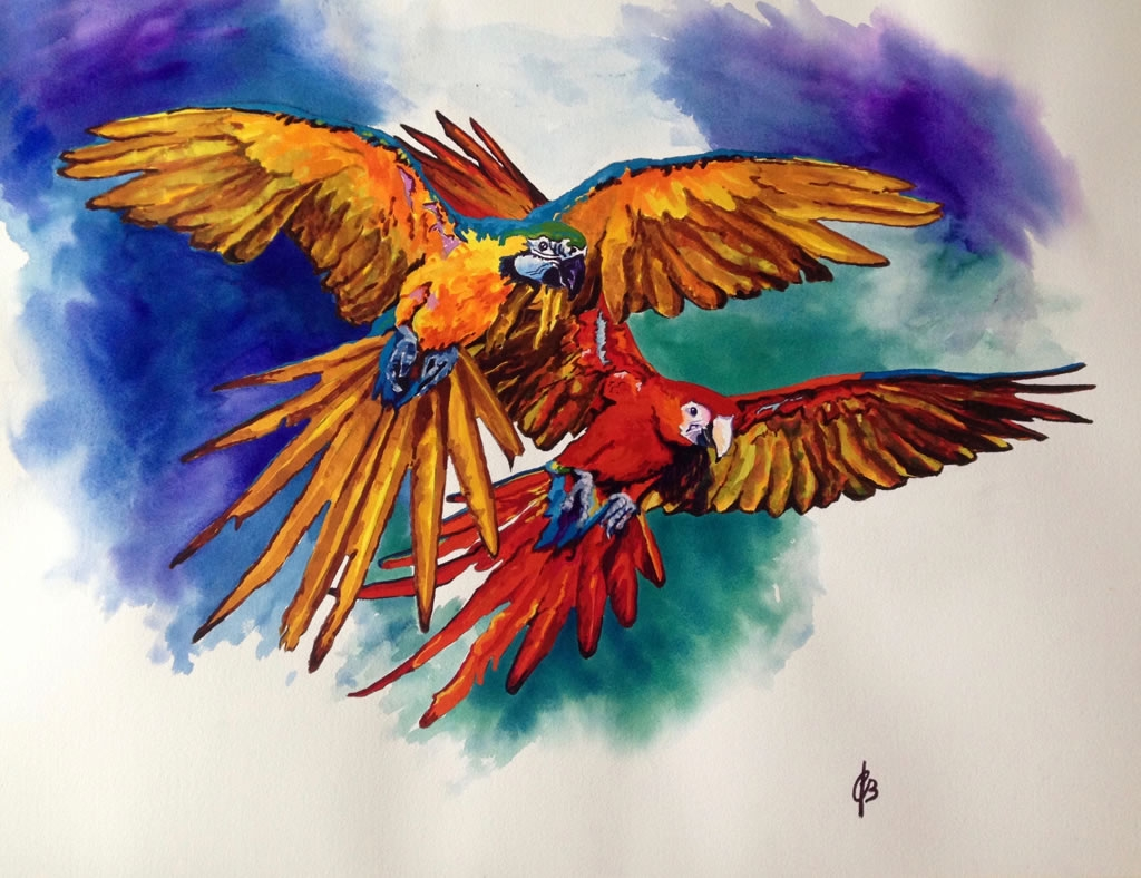 Macaws - 2D drawing